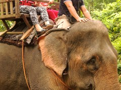 Famtrip to Laos - Elephant ride